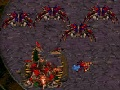 Starcraft Flash V Action